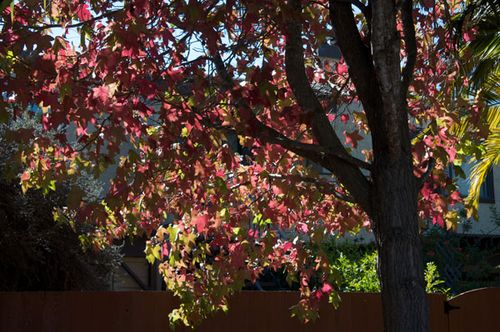 Fall-leaves_600