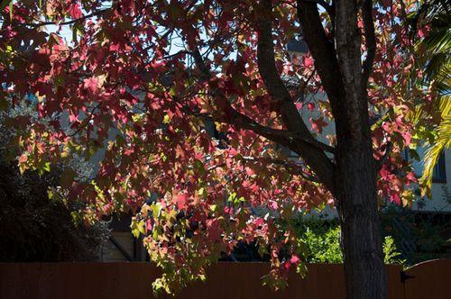 Fall-leaves_600