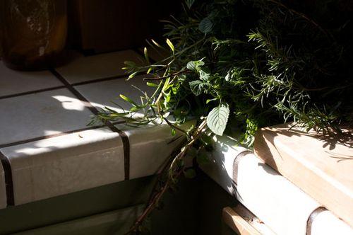 Herb-harvest_600