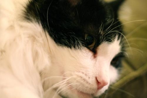 C_cat